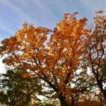 Sobota 13. října - krásný podzim