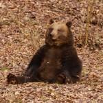 Medvěd Matěj