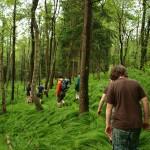 Průzkum lesa