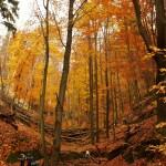 Podzim v Národním parku