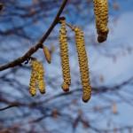 Jarní umění