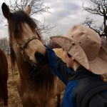 Potkali jsme koně
