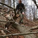 Pavel (překonávání stromu)