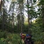 Středohorský les