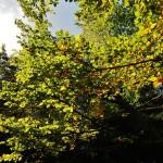 Podzim 2