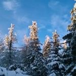 Zimní atmosféra