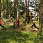 Hry v lese